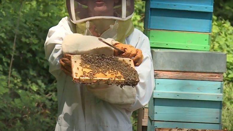 La douceur de l'hiver et les chaleurs du printemps ont favorisé le développement des colonies d'abeilles. / © Anthony Borlot - France 3 Bourgogne
