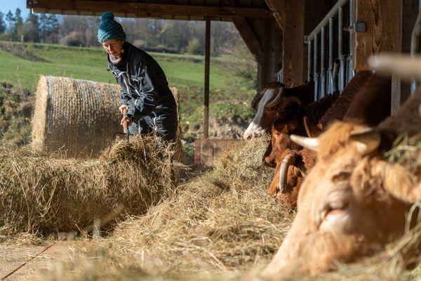 Hélène a toujours rêvé d'avoir des vaches.
