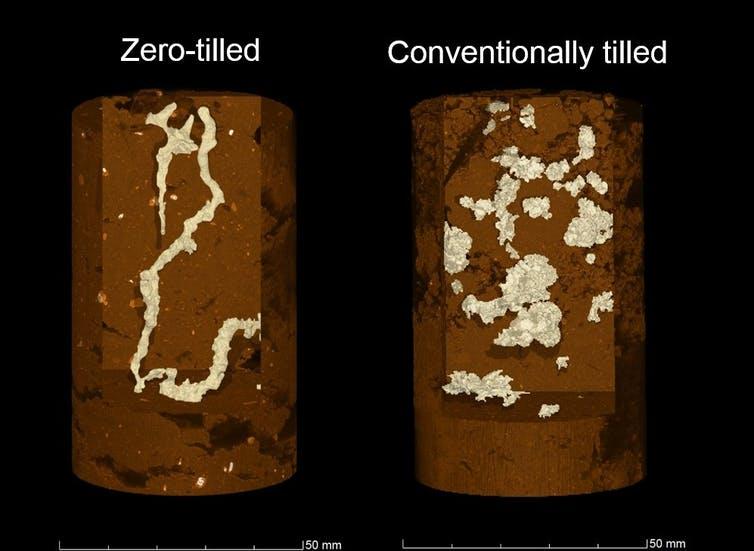 Images à rayon X comparant une carotte de sol provenant d'un champ avec labourage conventionnel, par rapport à un champ sans labourage