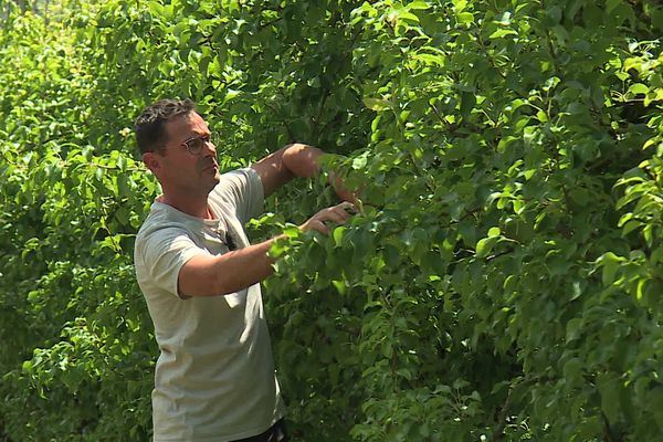 Les arbres de Sylvain Geoffroy sont dépourvus de fruit en cette saison de récolte.