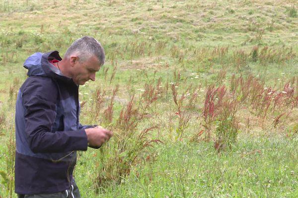 En plein mois de juillet, la saison des foins est totalement perturbée par la météo et l'éleveur de bovins Jean-Baptiste Alpy, installé près de Nozeroy dans le Jura, désespère.